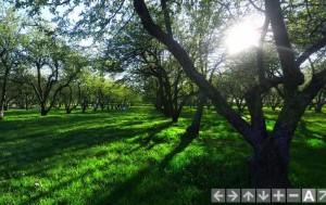 Коломенское, яблоневый сад